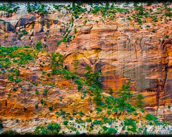 Zion National Park, Painted Canyon Wall, Desert Photography PRINT, Travel Landscapes, Zion Wall Art, Creative Zion Photo