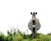 Tanzania Animal Nature Photography, Zebra on Green Grass, Black, White, Africa, Safari, Nursery Art