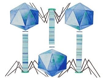 Bacteriophage, Original Watercolors Painting, Watercolor Print, Science Art, Virus, Microbiology, giclee print, Science decor