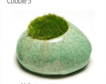 Moss Rocks - Cobble Lichen 5 inch