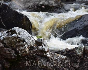 Peek a Boo,Rogie falls Scotland, 11.7x16.5in Photo Print -  Mounted 16x20in