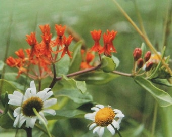 In the Field, Wildflower Series, Art Photography