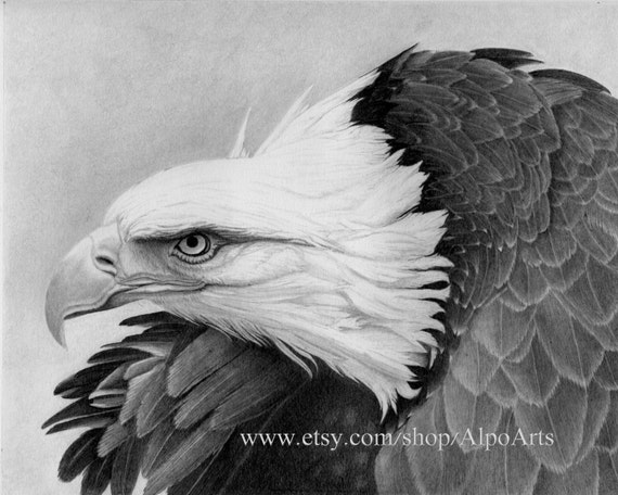 Eagle Pencil Drawing, realistic wildlife drawing with bald eagle in flight, patriotic eagle picture, 8x10 fine art print or matted print