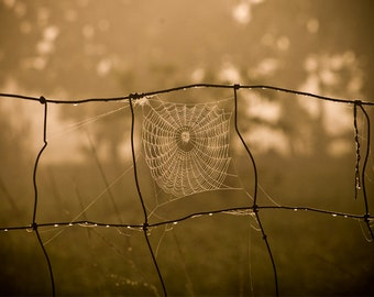 Photography - Spider Web Photo - Nature Photography