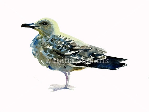 Watercolour sea gull on white background digital download from original watercolor animal pattern nursery bird clip art