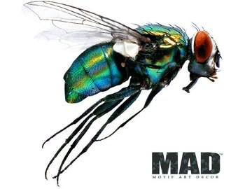wall sticker wall decal FLY