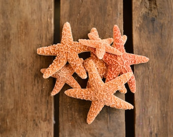 Brown Sugar Starfish Set of 6