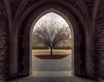 Duke University Photo Coming Out in Winter Fine Art Photography Duke West Campus Print Durham NC Graduation Gift Blue Devils Tree Archway