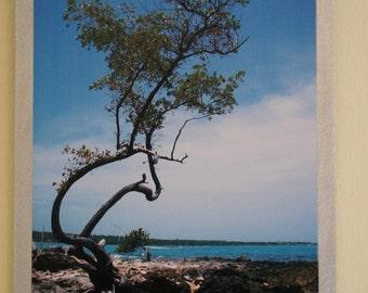 Jamaican Tree Print