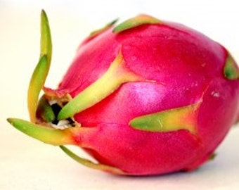 "Organic Rooted ""Valdiva Roja"" Dragon Fruit Cutting / Plant"