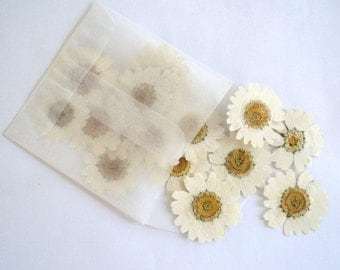 WHITE DAISIES, Dried Flowers, Pressed Daisies - add to Wedding Confetti, Flower Girl Petals, seating cards, party decor, craft projects