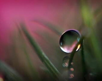Pink Water Drop Macro Photography, Green & Pink Fine Art Photo Print, Horizontal Wall Art,  Pink Home Decor, Fine Art Nature Photography