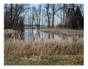 Lake House Wall Decor - Nature Art Prints - Nature Photography Wall Art - Landscape Photo - Country Decor - Ohio Photography