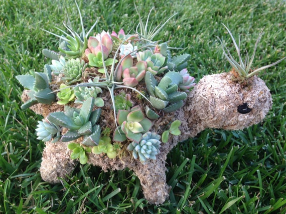 Mini Succulent Turtle- Perfect addition to your spring garden, makes a great teacher gift, birthday present, housewarming gift