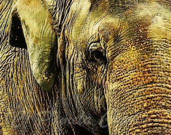 """Elephant drawing print: Elephant art print African elephant art African art African elephant decor Asian elephant 12x18"""""""