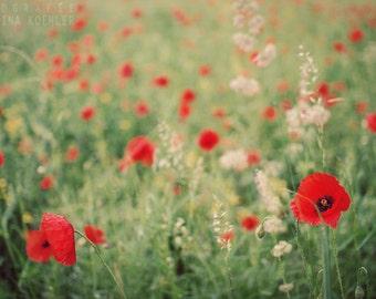 POPPY FIELD photography print, romantic summer meadow,  8x12