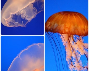Jellyfish Photo Set, Digital Download, Underwater Photo, Aurelia, Ocean Art, Aquarium