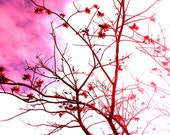 Nature, Plant, Shades of pink, red, tree , print 8x10. - fotographx