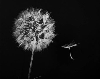 Dandelion Art, Dandelion Photograph, Black and White, Dandelion and seed, Wall Decor, Minimalist Nature Photography, 5x5 8x8