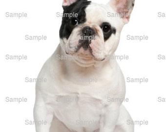 French bulldog cake topper | Etsy