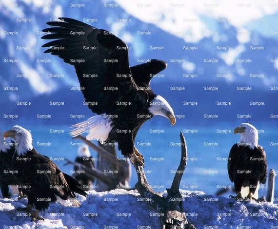 Bald Eagle Landing Birthday - Edible Cake and Cupcake Topper For Birthday's and Parties! - D6559