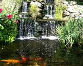 Koi Pond - Photo Magnet