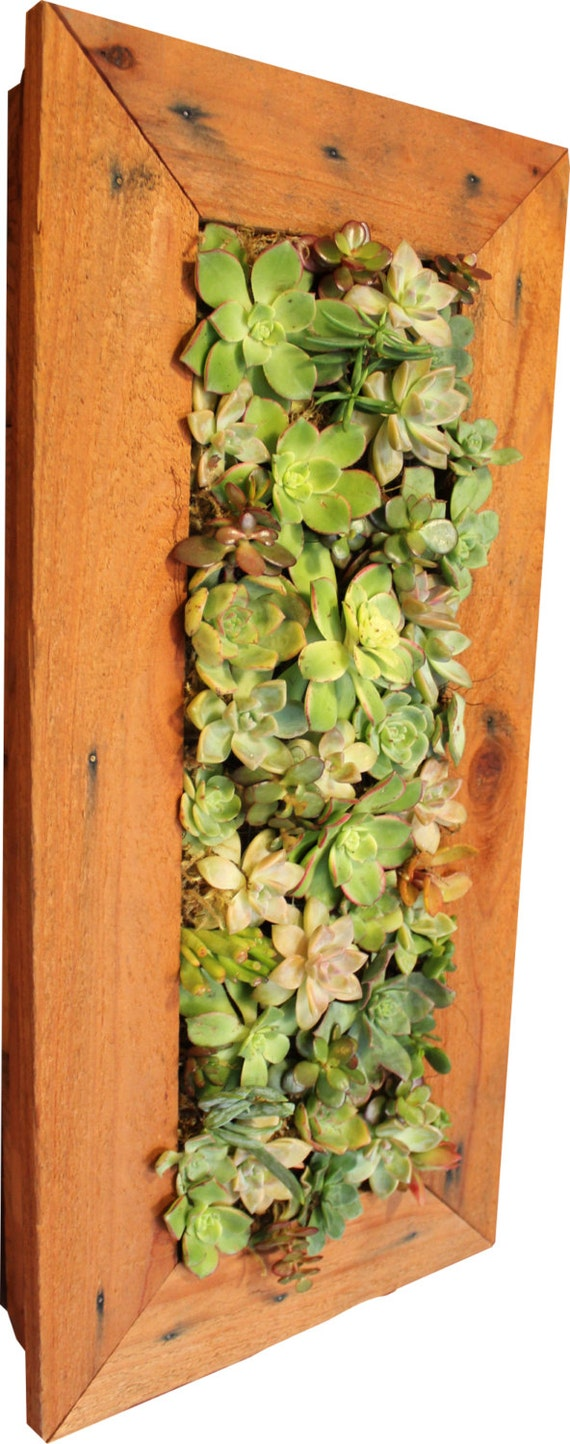 1 39 x 2 39 indoor outdoor living vertical wall with by for Indoor succulent wall