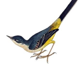 Bird Graphic - High Resolution Digital Download No.112