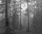 Arctic forest, 5 am: gelatin silver print, baryta, fine art print, nature photograph, black and white photography, black and white pictures