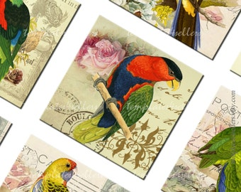 Digital Collage Sheet  Parrots 1 inch square images Exotic Birds  Scrapbooking Pendants Printable Original  Vintage 4x6 inch sheet  104