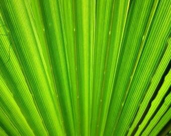 Arizona Nature Print