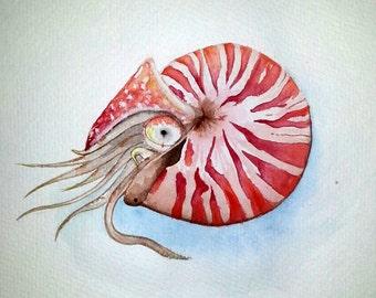 Print Nautilus watercolor painting original