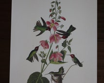 Columbian Hummingbird John James Audubon Art Plate CCCCXXV to Frame or for Collage, Scrapbooking, Paper Arts, Assemblage and MORE