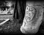 Love and Death, Heart in Old Tree in Cemetery, Handmade Greeting Card, Blank  Inside, Fine Art Photography, 5x7 card 4x6 photo, Home Decor