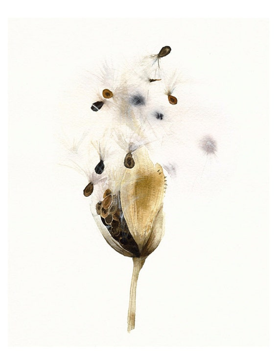 Milkweed Pod- Botanical Archival print of original Watercolor, botanical art