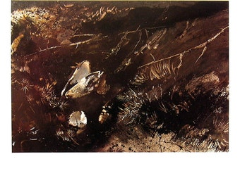 Andrew Wyeth Art - The White Shell - 1992 Vintage Reproduction Book Page - 12 x 9