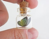 Tiny Green Butterfly Bottle Necklace