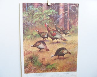 Vintage Bird Print - Turkey Print - Game Bird Print - Wild Turkey Book Print - Lynn Bogue Hunt - Walter Foster - Field and Stream Mag