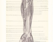 1899 Human Anatomy Print - Muscles and Nerves of Arm - Vintage Antique Medical Anatomy Art Illustration for Doctor Hospital Office