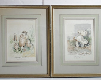 FINAL REDUCTION - Vintage Set of Four Framed Mushroom Prints / Bookplates / Drawings / Watercolors / Pictures