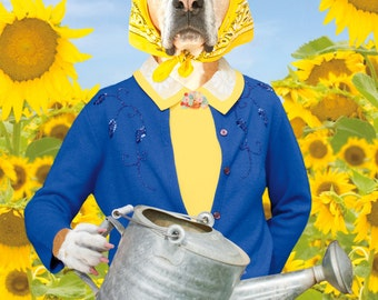 Flutter By, large original photograph of boxer dog wearing clothes and watering sunflowers with monarch butterfly
