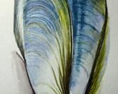 Mussel shell -- original watercolour pencil drawing