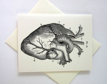 Anatomical Heart Cards Set of 10 in White or Light Ivory with Matching Envelopes