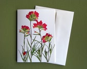 Indian Paintbrush wildflowers of Texas, Texas hill country, ladybug, pressed flowers, botanical greeting card, no.1151