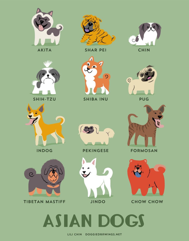 Asian Dog Breed List