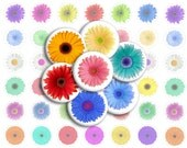 Gerber Daisies Printable 1-Inch Circles / Bottlecap Images / Gerbera Daisy Flowers / Jewel Tones / Digital Collage / Floral / Daisy Rainbow