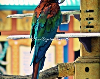 Island Art, 8 x 10 Parrot Photography,Tropical,Colors,Parrot,Nature,Beach Print,Beach House,Teal,Moody, Earthy,Summer Home,Macaw,Bird,jungle