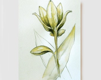 Lirium - Flower - Original charcoal drawing - Acid free paper Sennelier 200 gr. by Cristina Ripper