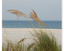 At the Beach Photo - Gulf Coast Art - Sea Oats Photo - Alabama Beach - Beach Wall Art - theRDBcollection - Renee Dent Blankenship
