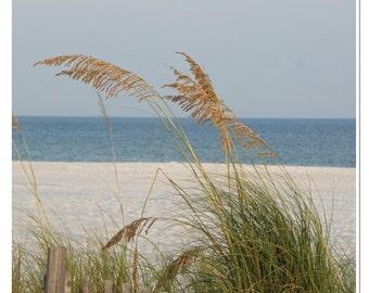 Gulf Coast Beach - Sea Oats Photo - Along the Gulf Coast Print - Alabama Beach - Beach Wall Art - Gulf Shores - Beach Photography